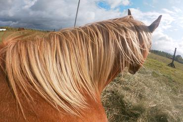 Horse one love